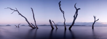 Tree panorama, Corrie Island Port Stephens, NSW