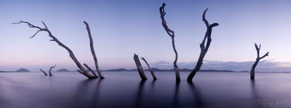 Tree panorama, Corrie Island Port Stephens, NSW