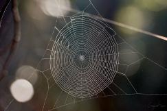 Spider web - Gloucester Tops