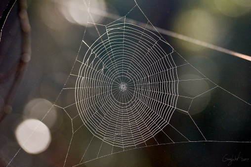 Spider web - Gloucester Tops
